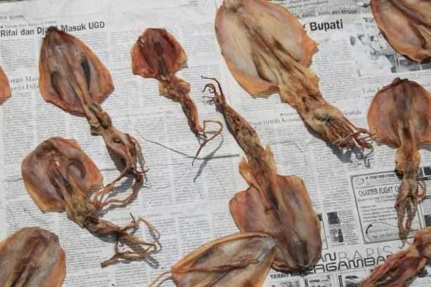 kałamarnice suszą się na ulicach, rozłożone na gazetach