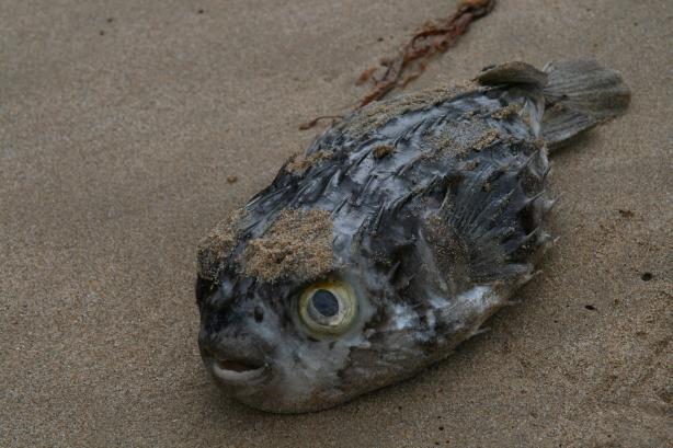 Fale są tak potężne, że nawet ryby nie dają sobie z nimi rady.