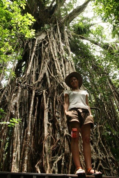 pradawne fikusy w głębi lasów