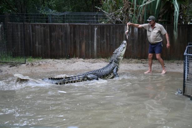 Niektóre krokodyle w rzekach i strumieniach Queenslandu mogą mieć nawet siedem metrów długości.