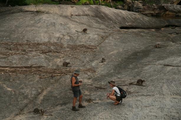 Kangury w Granit Gorge