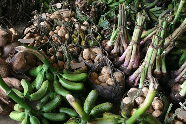 korzeń taro, banany, które się piecze przed jedzeniem i dużo dużo innych warzyw.