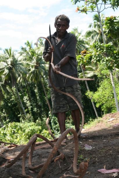 Liny, przypominające liany, wyrabiane są z pociętych gałęzi sosny.