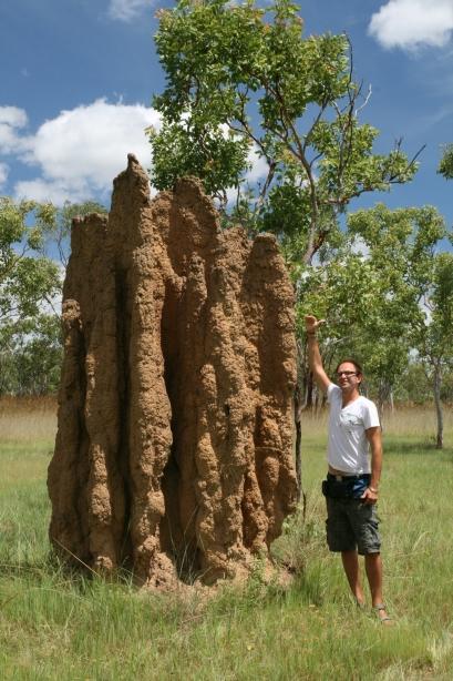 Termitiera gigant.
