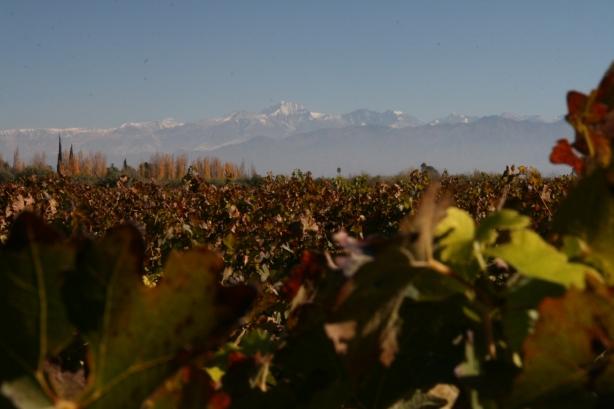 Po przeprawie przez Andy nie od razu pojechaliśmy do Buenos. Najpierw zatrzymaliśmy się w mieście Mendoza i jeździliśmy po okolicznych winiarniach degustując miejscoy malbec. W tle oczywiście Andy.