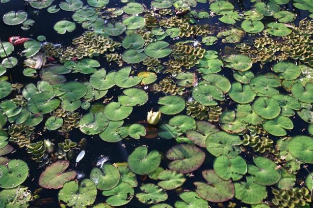 Pantanal.