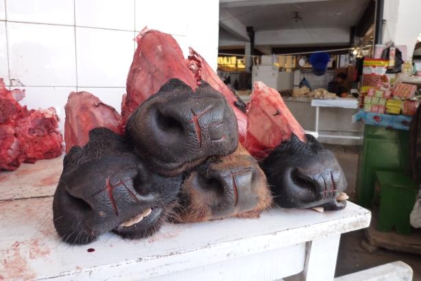 Składnik andyjskiego przysmaku: zupy z krowich pysków.