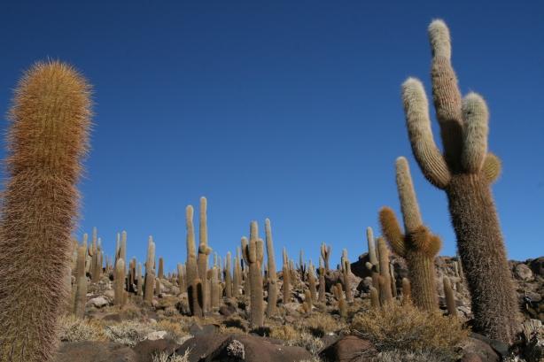 Isla del Pescado - wyspa skał i kaktusów na morzu pustyni.