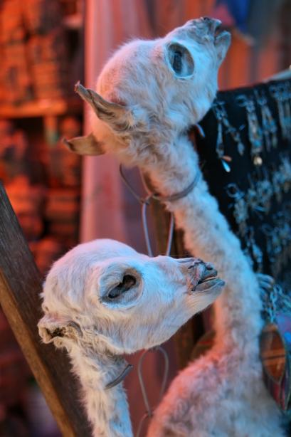 Ususzone płody lamy sprzedawane na Rynku Czarownic, na ofiarę dla Pachamamy.