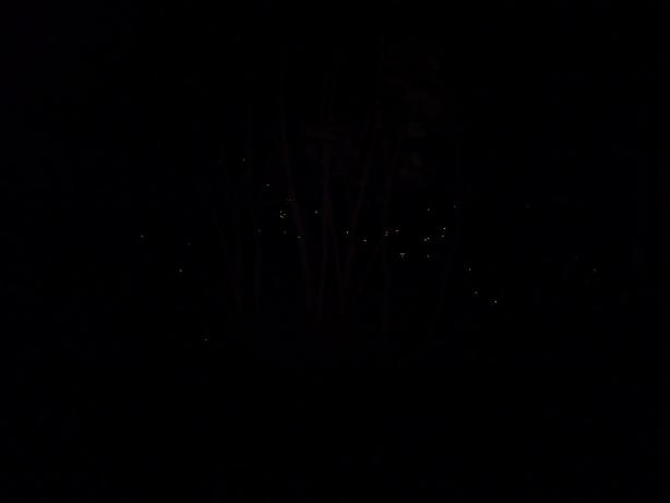 Po zachodzie słońca bagna roiją się od kajmanów. Oto ich oczy podświetlone reflektorem z dżipa.