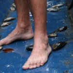 Walka o kolacje czyli lowienie ryb w Amazonii.