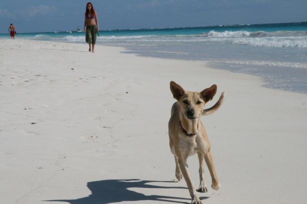 Rajskie plaże w Tulum.